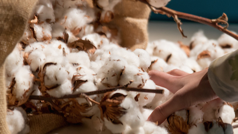Tracing the source of organic cotton to the farm and through its journey across the supply chain will enhance Kering's sustainability credentials with end-consumers. Image credit: Kering